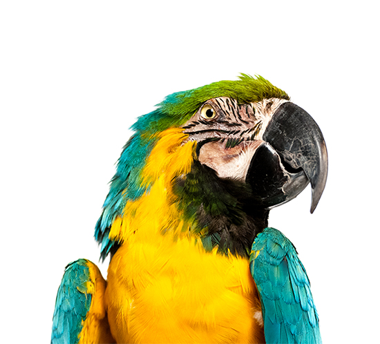 parrot-featured-iamge