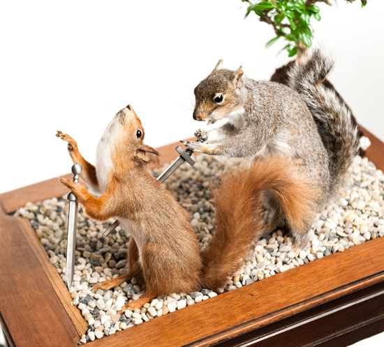 squirrels taxidermy