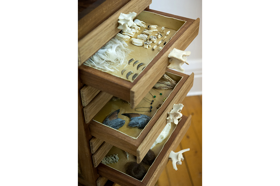 taxidermy-drawer