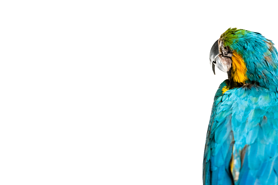 taxidermy-parrot