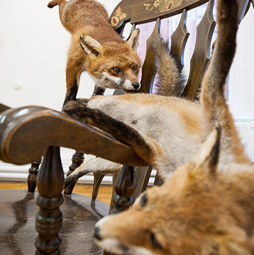 fox-taxidermy-and-rocking-chair