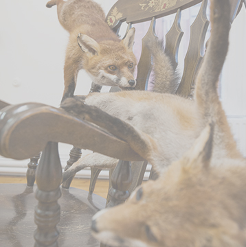 art-from-taxidermy-irish-taxidermy-artist