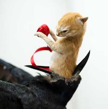 taxidermist-art-of-a-kitten-in-a-crows-gob-holding-a-red-ribbon