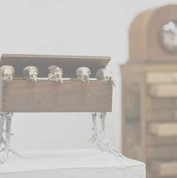 taxidermy-art-bird-skulls-in-box-hover-image