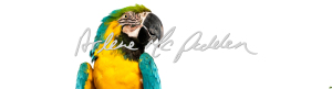 parrot-taxidermy